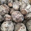 大山の田芋